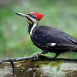 bird_woodpecker
