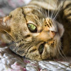 cat_restful