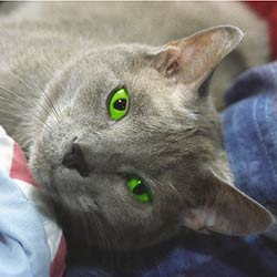 cat_green_eyes