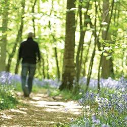 woods_man_walking