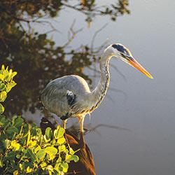 bird-heron