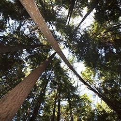trees scrub pollutants