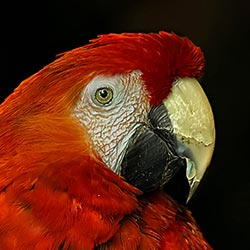 World Parrot Trust USA