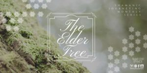 The Elder Tree | Shamanic Journeying Monthly Series @ Sacred Space Yoga + Meditation | Minneapolis | Minnesota | United States