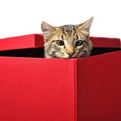 cat_box
