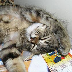 cat-nap