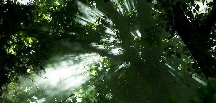 trees-light