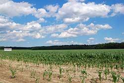 EarthTalk Farms